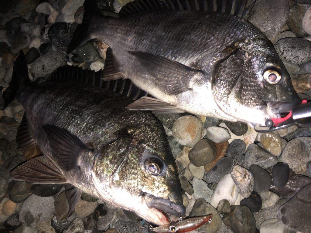 ホタルイカパターン 富山 糸魚川 釣り方