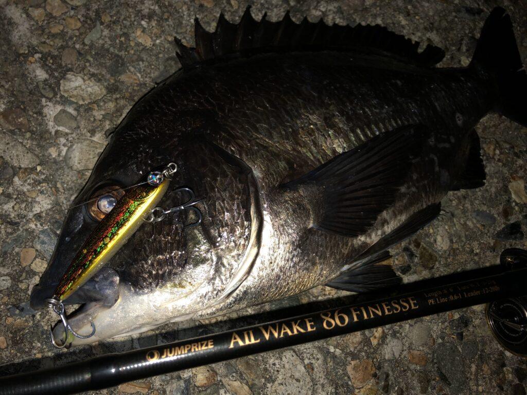 ホタルイカパターン 釣り方 ルアー 富山