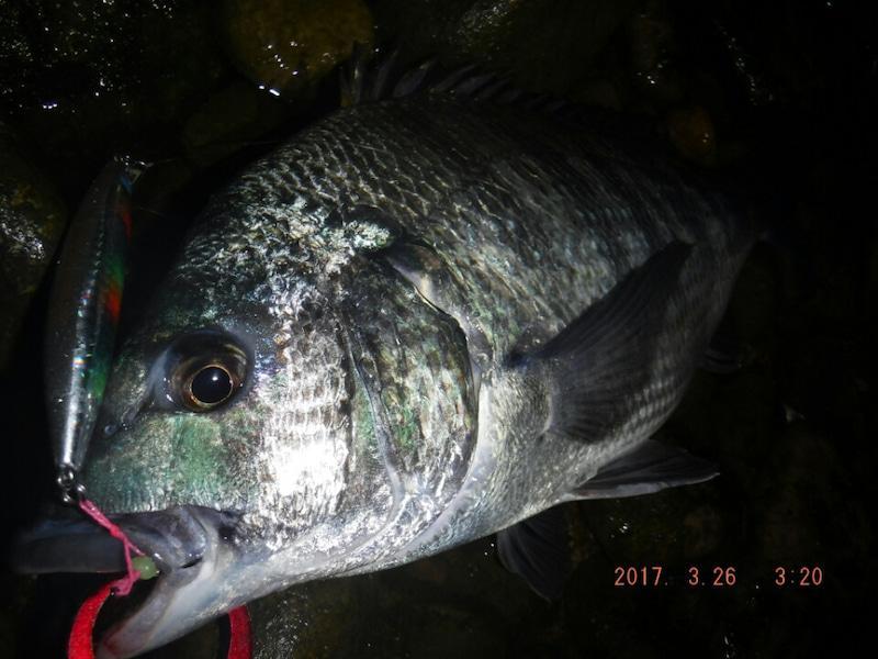 ホタルイカパターン 釣り 富山 釣り方 糸魚川 チヌ ホタルイカパターンポイント