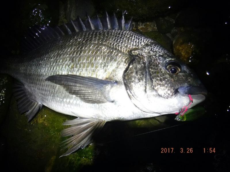ホタルイカパターン チヌ 釣り方 ポイント ルアー